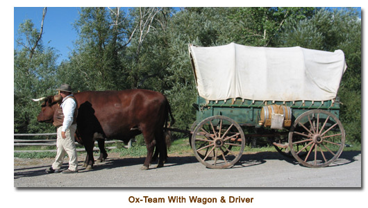 Ox-Team with wagon and driver